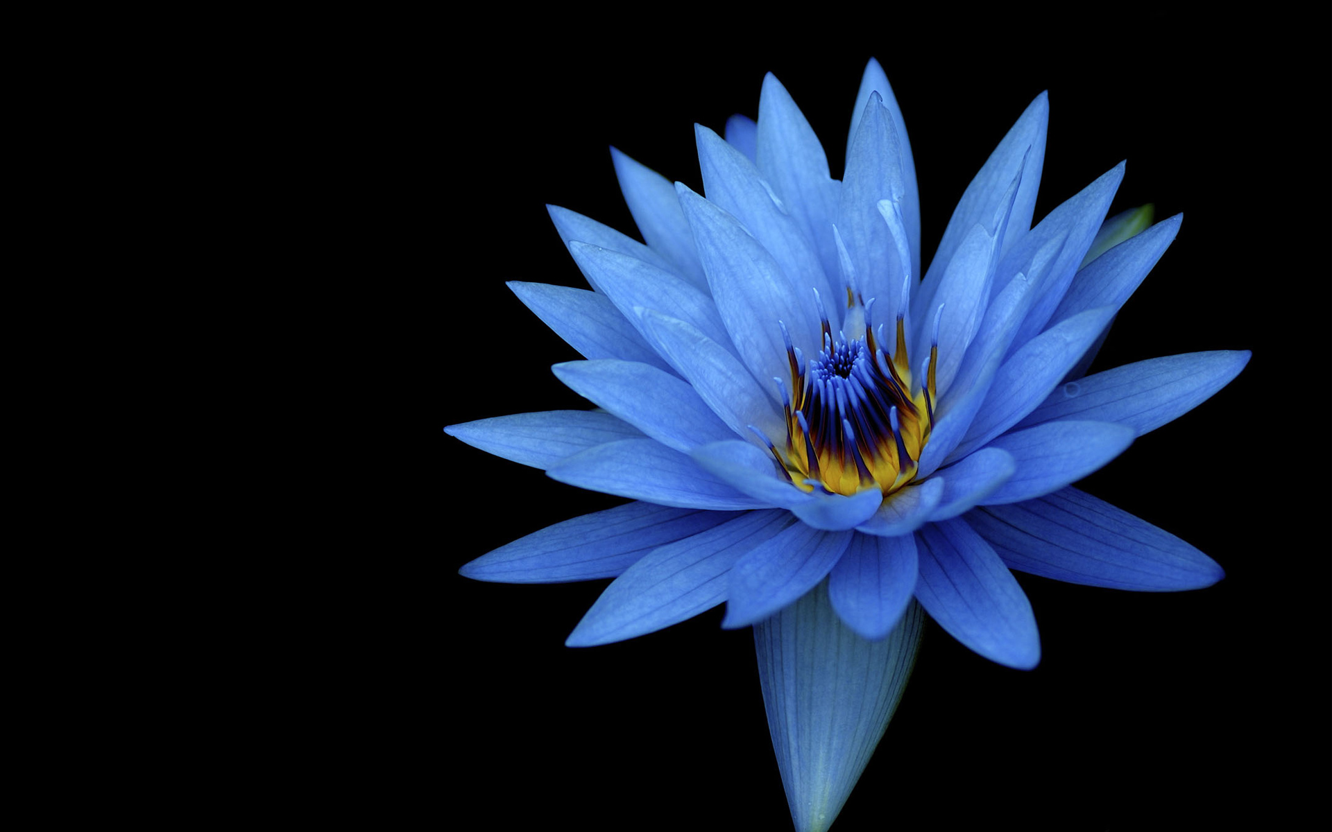 Sony Xperia Z Stock Blue Flower