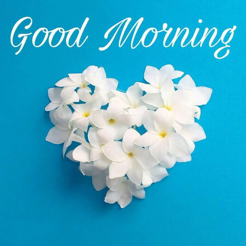 Good Morning With White Flower