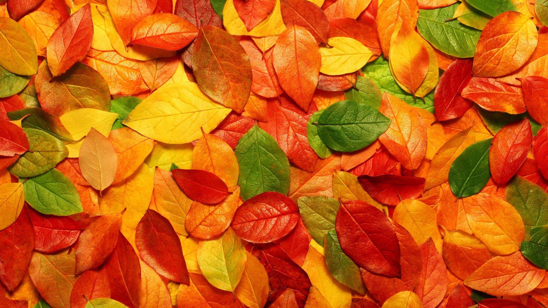 http://www.jkahir.com/wp-content/uploads/2017/11/Tree-Colorful-Leaves-Real-Colors-Nature.jpg